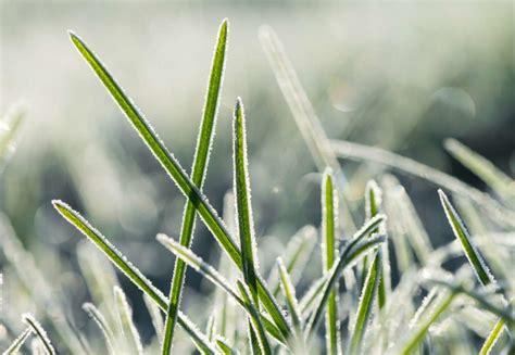 rasen winterfest machen rasen winterfest machen 252 berwintern tipps vom experten plantura