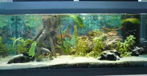 d 233 coration d aquarium