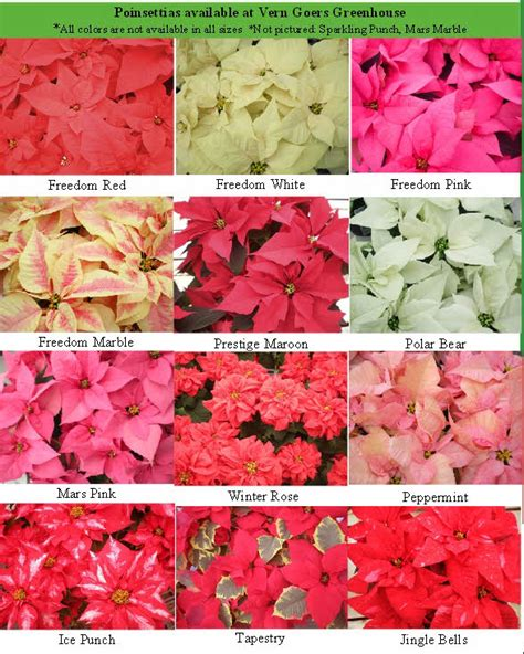 poinsettias colors holiday gift guide winter floral class auto show flowers football flaces