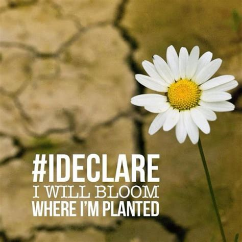 I Declare I Will Bloom Where Im Planted Pictures, Photos