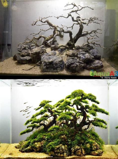 Aquascape Ideas by Evolution Rank 49 Iaplc 2014 By Herry Rasio Learn To