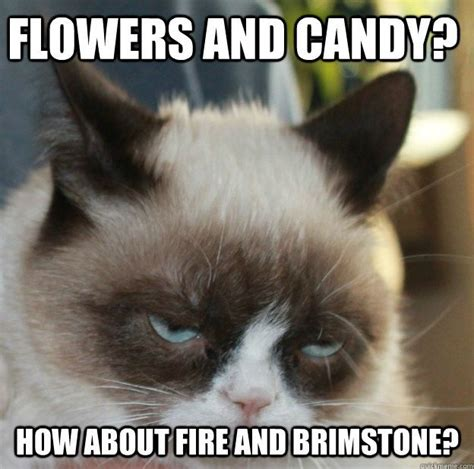 Anti Valentines Day Meme - being single on valentines day 11 anti valentine s day grumpy cat memes surviving college