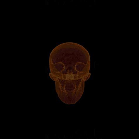 skull gifs  chroma bear  skull appreciaton society