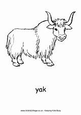 Yak Coloring Highland Pages Cow Colouring Cattle Super Template Scottish Preschool Yaks Printable Yancy Dairy Phonics Zoo Uu Zz sketch template
