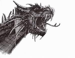 Drachen Schwarz Weiß : bild schwarz wei feder zeichnung tusche von c117 bei kunstnet ~ Orissabook.com Haus und Dekorationen