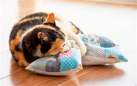 Toys Your Cat Will Go Crazy For!