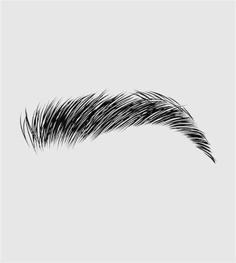 eyebrows drawing pencil sketch colorful realistic art