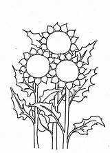 Sunflower Coloring Pages Three Colornimbus sketch template