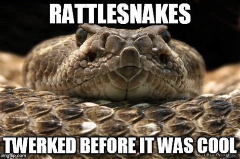 Snake Memes - hipster snake imgflip