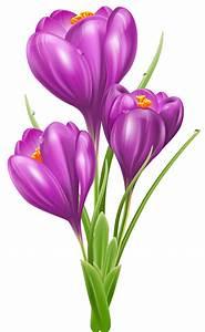 Pot De Fleur Transparent : transparent crocus png clipart picture flor pinterest autocollants fleur et dessin ~ Teatrodelosmanantiales.com Idées de Décoration