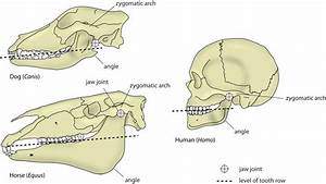 Jaw Type And Jaw