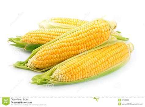 corn isolated stock photo image  ripe golden
