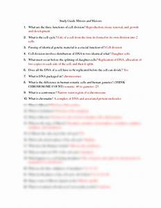 Study Guide Mitosis And Meiosis Answers Docx