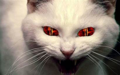 Cat Cats Demon Funny Evil Eyes Face