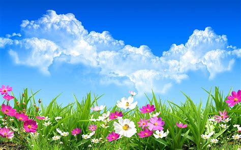 Download Beautiful Spring Background 1920x1200  Full Hd Wall