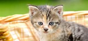 Was Brauchen Katzen : brauchen katzen ein k rbchen ~ Lizthompson.info Haus und Dekorationen