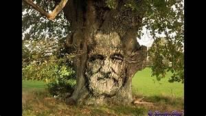 Comment Creuser Un Tronc D Arbre : il encule un tronc d 39 arbre au calme minecraft youtube ~ Melissatoandfro.com Idées de Décoration