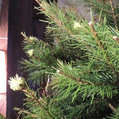 christmas tree 2012 002 zoomed