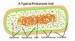 Gordon U0026 39 S Introduction To Cells