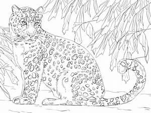 Dessin Jaguar Facile : coloriage l opard de l 39 amour coloriages imprimer gratuits ~ Maxctalentgroup.com Avis de Voitures