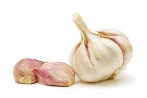 garlic for cats garlic and dogs garlic and cats is garlic bad for dogs
