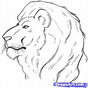 How to Draw a Lion Face, Step by Step, safari animals ...