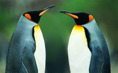 birds, Penguins Wallpapers HD / Desktop and Mobile Backgrounds