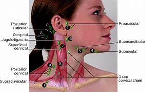 What Are Lymph Nodes  Locations  Functions  Symptoms  U0026 Images