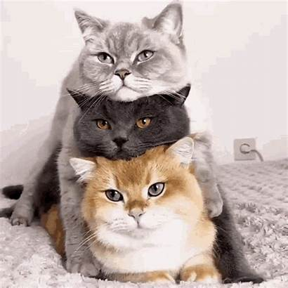 Cat Stacked Kittens Cats Gifs Pussy Sd