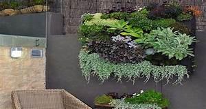 Plantes D Ombre Extérieur : comment planter et entretenir la succulente ~ Melissatoandfro.com Idées de Décoration