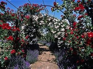 Plantes Grimpantes Mur : glycine jasmin tout ~ Melissatoandfro.com Idées de Décoration
