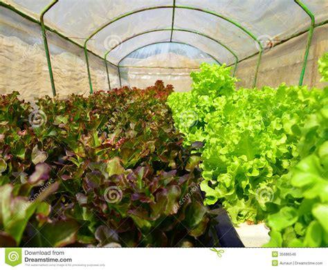 organic hydroponic vegetable garden stock photo image