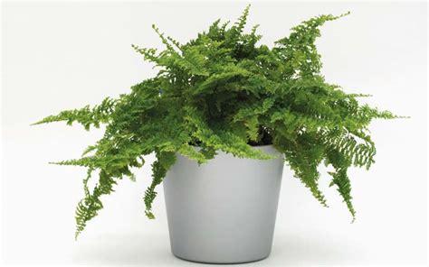 Pflanzen Die Giftstoffe Aus Der Luft Filtern by Pflanzen Die Giftstoffe Aus Der Luft Filtern Gesunde Luft