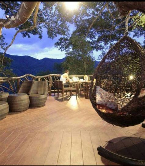 The treehouse coffee shop is the most awesome place. The Giant: Treehouse and Coffee Shop in the forest of Chiang Mai