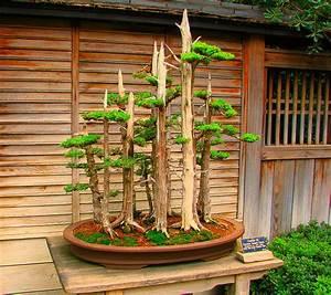Pflanzen Für Japangarten : japangarten vs zen garten was ist der unterschied ~ Sanjose-hotels-ca.com Haus und Dekorationen