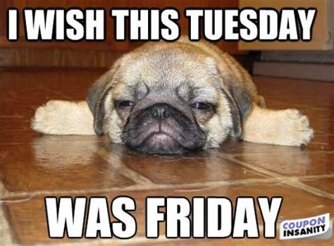 Tuesday Memes Funny - its only tuesday quotes quotesgram