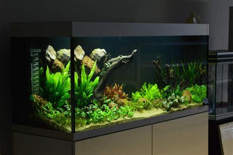 aquariums zoetwater verloop aquariums vijvers