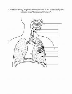 Respiratory System Diagram For Kids Unlabeled