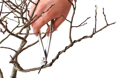 bonsai formen mit draht bonsai bescheiden bonsai drahten in hildesheim einfach bonsai drahten in glyzinien perlen draht