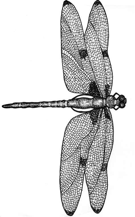 dragonfly plaque walnut hollow craft