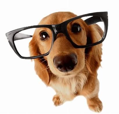 Dog Reading Seminars Events Resources