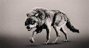 Symbole Du Loup : le symbolisme du loup la terre des loups ~ Melissatoandfro.com Idées de Décoration