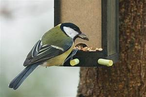 Graines De Tournesol Pour Oiseaux : du tournesol pour les oiseaux en hiver lpo occitanie ~ Dailycaller-alerts.com Idées de Décoration