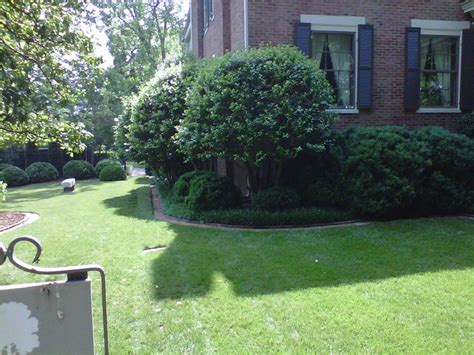 Superb Small Evergreen Trees For Landscaping # Small