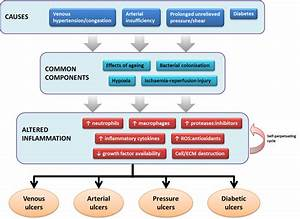 The Role Of Inflammation In The Pathophysiology Of Common