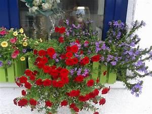 Herbstbepflanzung planen donnerwetterde for Garten planen mit balkon abdichtung bitumenbahn