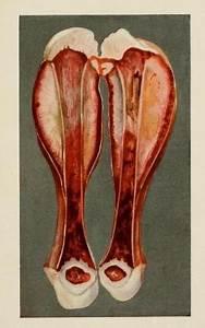 Diagram Of Hip Bone