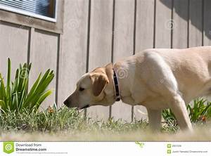 royalty free stock images sniffing dog image