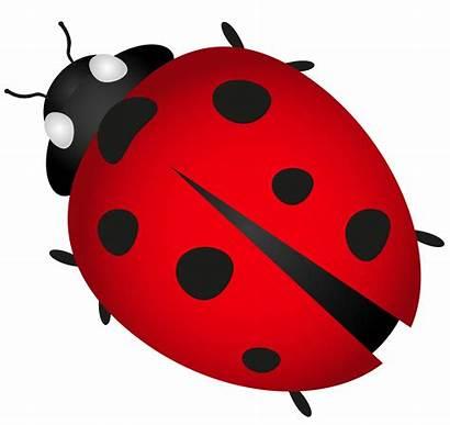 Bug Ladybug Transparent Clipart Clip Lady Bugs