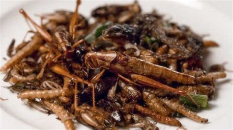 insecte cuisine will we all be insects in 50 years iflscience
